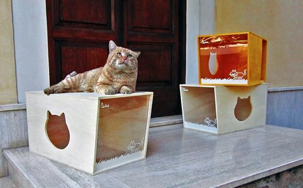 Qcha – Cat House